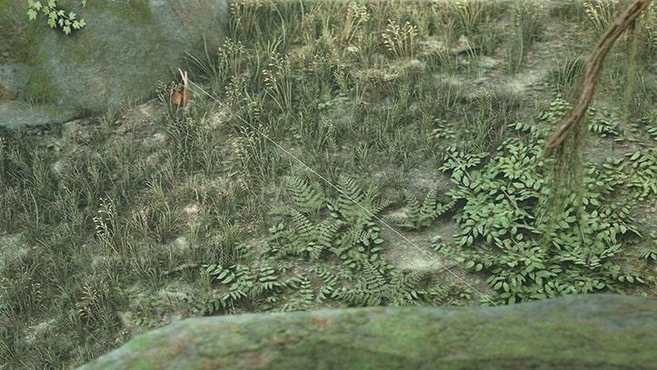 森に仕掛けられたトラップの画像