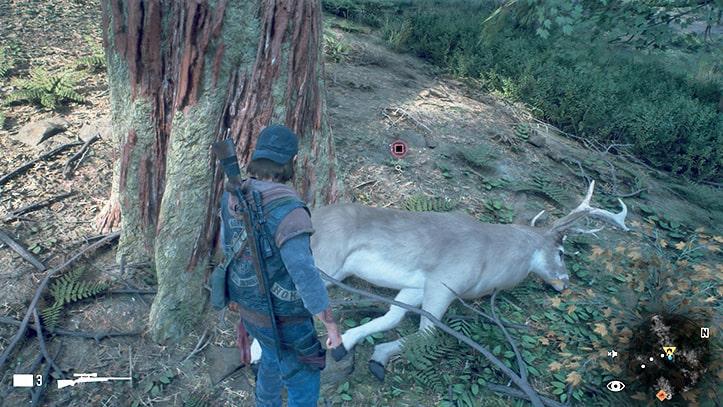ディーコンが撃ち殺した鹿の死体
