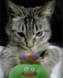 ベホマズンスライムと猫