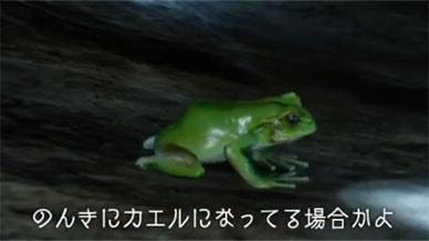 カエルになるトードの魔法