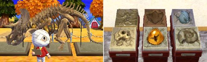 化石コレクション