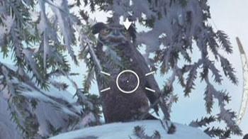 フクロウが木に止まっている画像