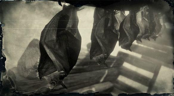 トビイロホオヒゲコウモリの画像