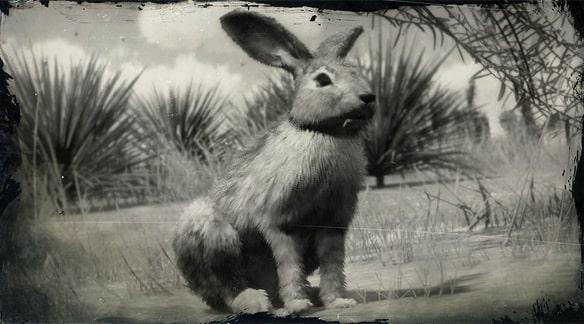 オグロジャックウサギの画像
