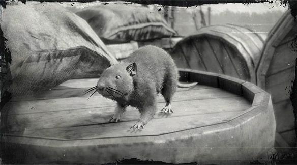 ドブネズミの画像