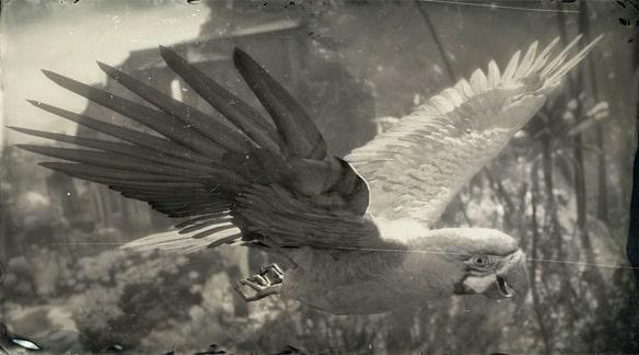 ルリコンゴウインコの画像