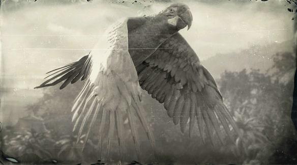 ヒワコンゴウインコの画像
