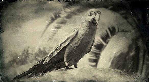 コンゴウインコの画像