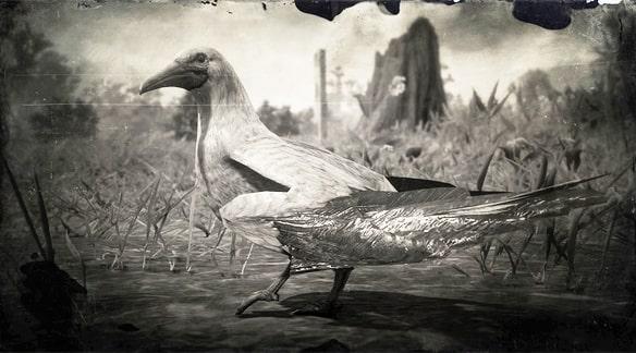 アカアシカツオドリの画像