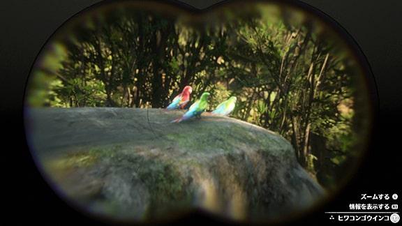 インコたちの画像