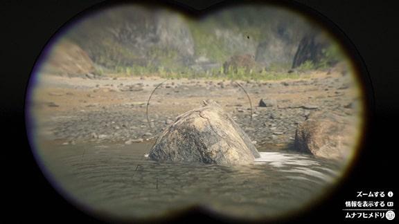 ムナフヒメドリの画像