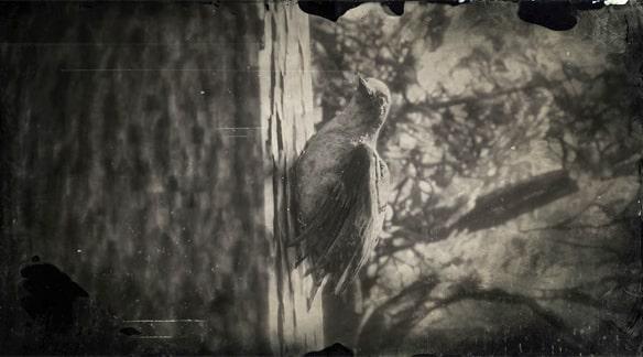シマセゲラの画像