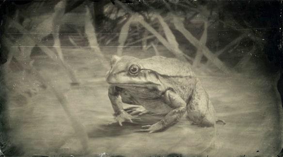 アメリカウシガエルの画像