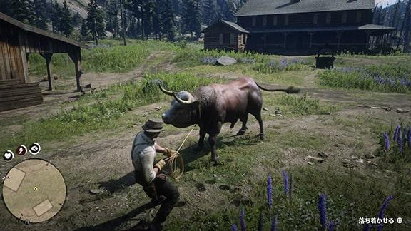 雄牛を捕まえているシーン