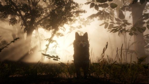 狼らしき野生動物の画像