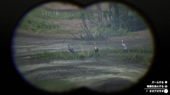 双眼鏡で動物を調べてる画像