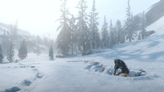 動物と雪野原の画像