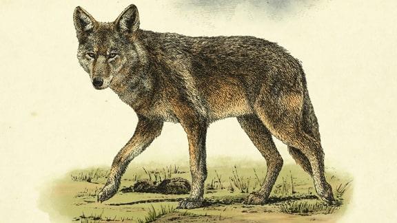レッドデッドリデンプション2に登場する野生動物の画像