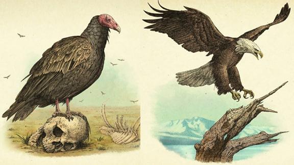 レッドデッドリデンプション2の鳥類の画像