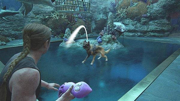 犬のアリスにおもちゃを投げて遊ぶ